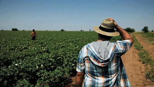 1-Farming-on-Crisis